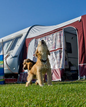 Globe Vale - among the truly dog friendly campsites in Cornwall.