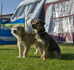 Yes, Globe Vale Holiday Park is dog friendly and welcomes pets.
